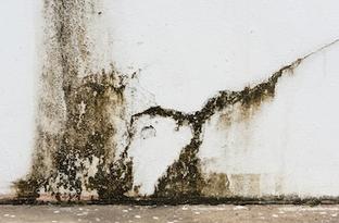 Traitement des murs